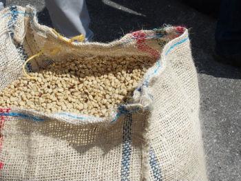 wmm_parchement_beans_bag-350x263